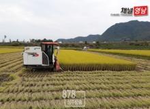 [상주]밥맛 좋은 쌀 생산의 기본은 적기수확!
