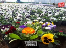 [상주]봄! 봄! 봄! 봄! 봄이 왔어요~