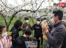 [상주]백원초, 하얀 사과꽃~