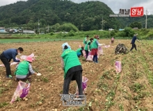 [상주]공검면 새마을단체 농촌일손돕기 봉사